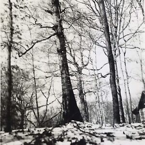 Vintage Black and White Photo Snow Winter Forest Trees Ground Woods Outdoors
