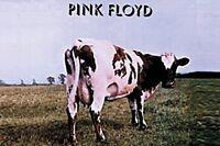 Pink Floyd Cow ( Atom Heart Mother) Stahl KÜHLSCHRANKMAGNET ( Cv )