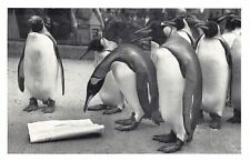 Nostalgia Postcard Penguins at London Zoo Reproduction Card NS44