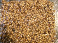 "1 KG."" SPECIAL PRICE "" FULLY COOKED TIGER NUTS,PARTICLES,SPOD,CARP FISHING BAIT"