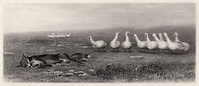 """Fabulous Briton Riviere 1800s Engraving  """"The Game of Fox and Geese"""" Framed COA"""