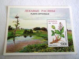 1996 Belarus Flora of Belarus- Herbs M/S m/m Mi.172. Z57