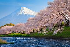 Fototapete-FUJI und SAKURA-(370P)-350x260cm-7Bahnen 50x260cm-Japan Gebirge Fluss