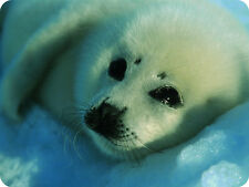 Mauspad Edition Colibri: kleines weißes Robbenbaby - little white seal