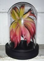 H POTTER WIZARD PLANT PROP DISPLAY  WWoHP THEME PARK FORBIDDEN JOURNEY