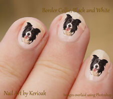 Black and White Border Collie, Working Sheepdog, Dog Nail Art Stickers Decals