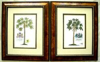 2 Antique Palm Tree Prints: Botanical Prints: Hand Colored: Ehret: London, 1750