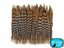 """Pheasant Feathers, 18-20"""" Natural Reeves Venery Pheasant Tail Feathers - 50 Pcs"""