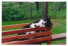 Gorgeous Black & White Kitty Cat Lounging Outside by Fence Found Photograph #2