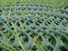 Grass Reinforcement Mesh Grassprotecta 2x10m Driveway Protection + 50 Steel Pins