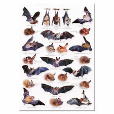 British Bats a 5 Identification Card Chart Postcard