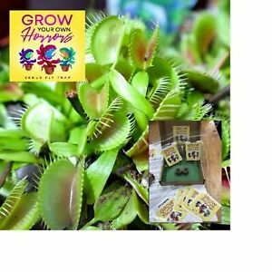 Carnivorous VENUS FLY TRAP GROW YOUR OWN KIT Seeds Peat Pods PACK OF TWO