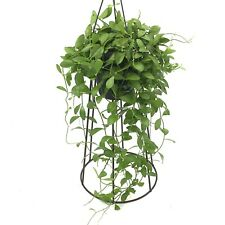 Hoya kerrii Cire//vert petite usine de 6-8 cm pot 3-4 Feuilles