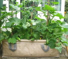 Good Value 130 ltrJumbo Growbags Ideal Vegetable/Salad Planter (H)