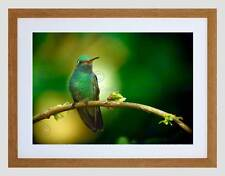 ANIMAL BIRD TORQUOISE HUMMING BIRD BEAUTIFUL BLACK FRAMED ART PRINT B12X4728