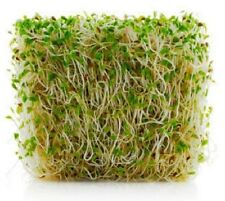 Alfalfa 10,000 Seeds  Garden Seeds 2u