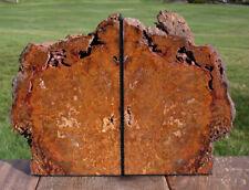 SiS: Unusual GOLD & RED Hubbard Basin Petrified Wood Bookends - 8+ lb Set!