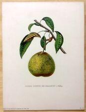 """Antique Alexandre Bivort """"Poire Bonne De Malines (Nelis.)"""" Print 9""""x12"""" - Pear"""