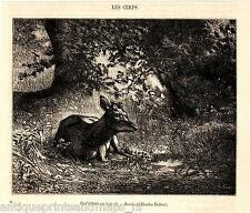 Antique print deer 1863 Rothirsch Cervus elaphus holzstich stampa antica cervo