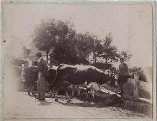 France vie rurale Vintage citrate ca 1900