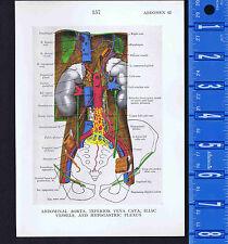 Abdominal Aorta, Inferior Vena Cava, Plexus & More- 1947 Medical Anatomy Prints