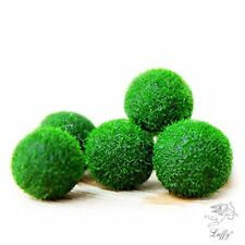 LUFFY Nano Marimo Ball x 5 pcs - Live Aquarium Aquatic Plant for Fish Tank and A