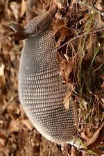 An Armadillo in Texas Journal : 150 Page Lined Notebook/Diary by C. S.