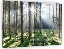 STUNNING WOODLAND FOREST CANVAS PICTURE PRINT WALL ART CHUNKY FRAME LARGE 643-2