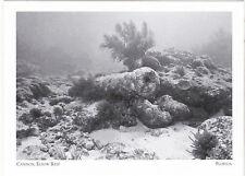 """*Postcard-""""Cannon Elbow Reef"""" @ Elbow Reef/Key Largo- @ Florida (#47)"""