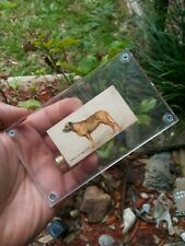 1889 N163 Goodwin & Co (Old Judge) Dogs -English Mastiff (With Acrylic Case)