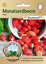 Monatserdbeere 'Rügen' - Fragaria vesca, Erdbeere Samen,  Saatband, 43035