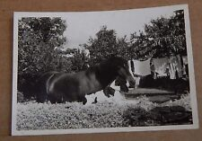 Photograph Social History Horse & Spaniel Sitting Close together   1960's