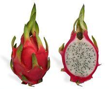WHITE DRAGON FRUIT CACTUS Pitaya Seeds  $ (10 seeds)  R-014
