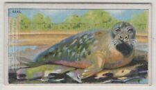 Seal Sea Mammal 90+ Y/O Trade Ad Card