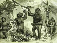 New Man Monkeys KOOLOO-KAMBA GORILLA NSCHIEGO 1859 Antique ANIMAL Print Matted