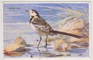 Bird postcard - Spink BIRD - P/U (A38)