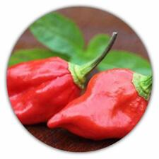 Naga Morich Chili / 50 Samen / 1.000.000 Scoville / Eintrag im Guinnessbuch