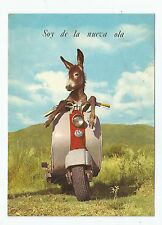 Photo Postcard / Donkey Driving A Scooter Vespa / Decade 70' / Very Funny / Rare