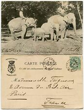 CEYLON MARITIME to FRANCE 1907 LIGNE CANCEL...ELEPHANTS PPC...PAQUEBOT ORIGIN