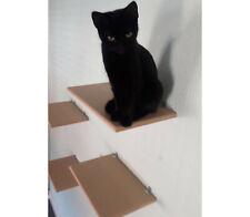 Cat Wall Shelves set of 5