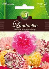 5423570 Landnelken gefüllte Mischung  Nelke Nelken  Samen Saatgut Dianthus