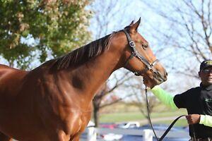 8x10 color photo - LADY EIL  at  november SALES  headshot