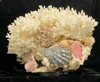 "LARGE 11"" X 8"" X 8"" BRANCH CORAL & SEASHELL AQUARIUM DISPLAY ON GLASS"