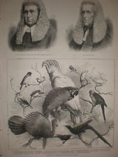 Exhibition of Caged Birds Crystal palace London 1875 old print and article