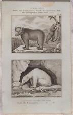 BUFFON ORIGINALE 1850 ORSO BIANCO BRUNO WHITE BROWN BEAR ZOOLOGIA ANIMALI