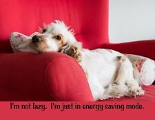 METAL REFRIGERATOR MAGNET Dog Not Lazy In Energy Saving Mode Dogs Humor