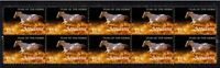 APPALOOSA STRIP OF 10 YEAR OF THE HORSE VIGNETTE STAMPS 1
