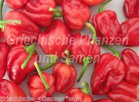 🔥 🌶️ Habanero rot Chili Chilli ultrascharf  10 frische Samen Balkon