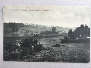 Chorleywood Common Cherry Tree Dell c.1916 (Youngs Stores) postcard Herts