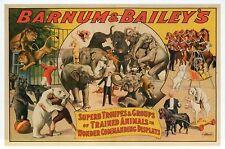Barnum & Bailey Circus ,Trained Animals Elephant Lion Horse etc. Modern Postcard
